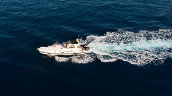 dolphins Tenerife Opera 33