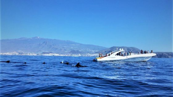 watersports tenerife sailing dolphins