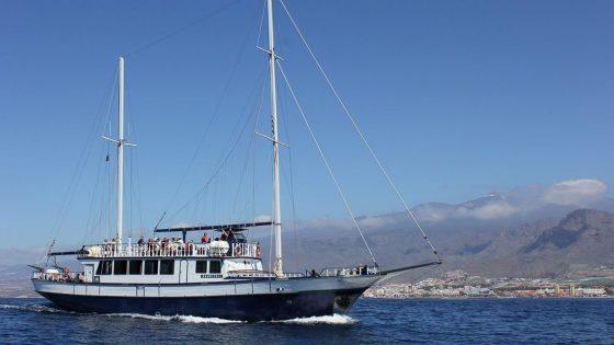 whales sailing tenerife